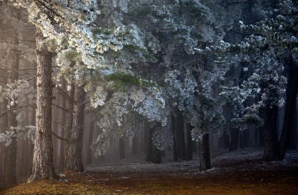 Победитель в номинации «Магия растений» - Илья Степанов