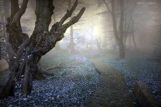 Сказочный лес 7