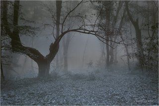 Сказочный лес 10