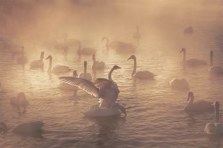 Лебединое озеро на рассвете