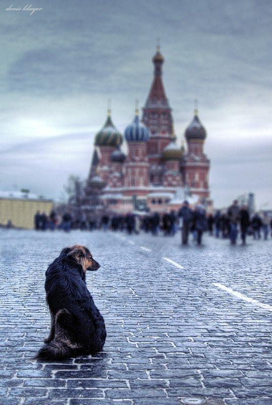 фото, жанр, собака, тоска, красная площадь, денис клюев, Денис Клюев