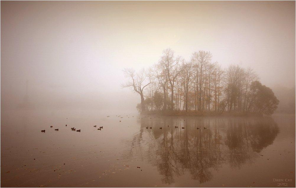 питер, туман, пушкин, пруд, утки, пейзаж, призраки, остров, Darn Cat