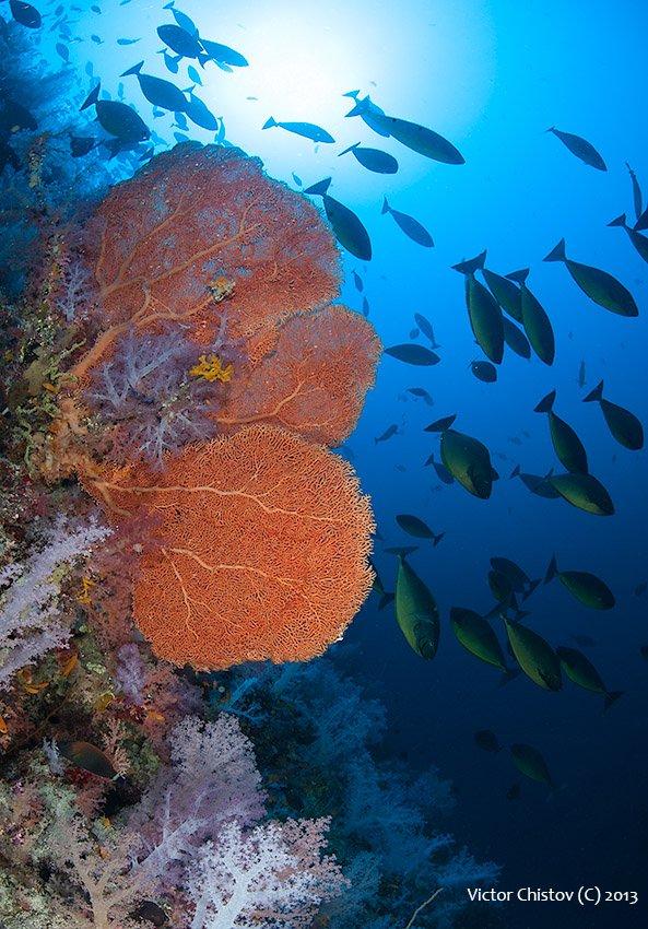 underwater, red, sea, Виктор Чистов