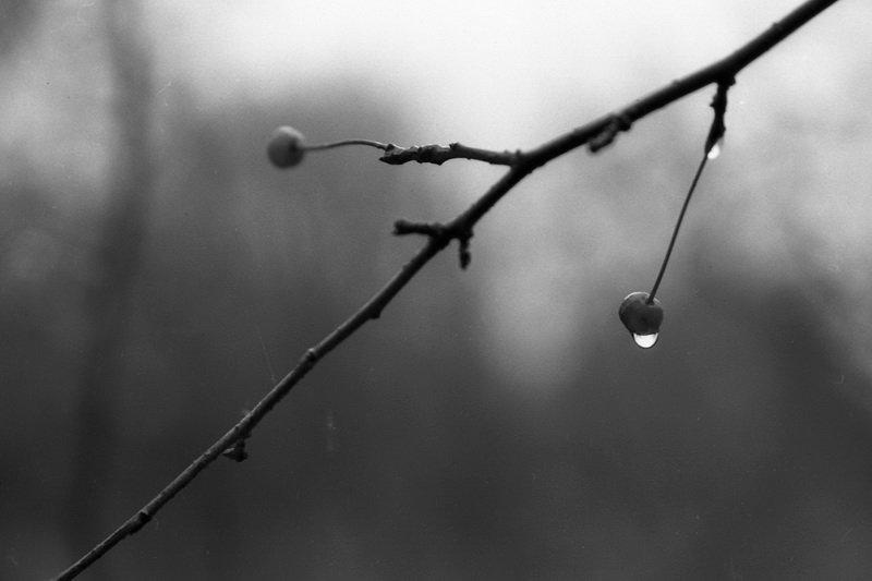 черно белая картинка осень