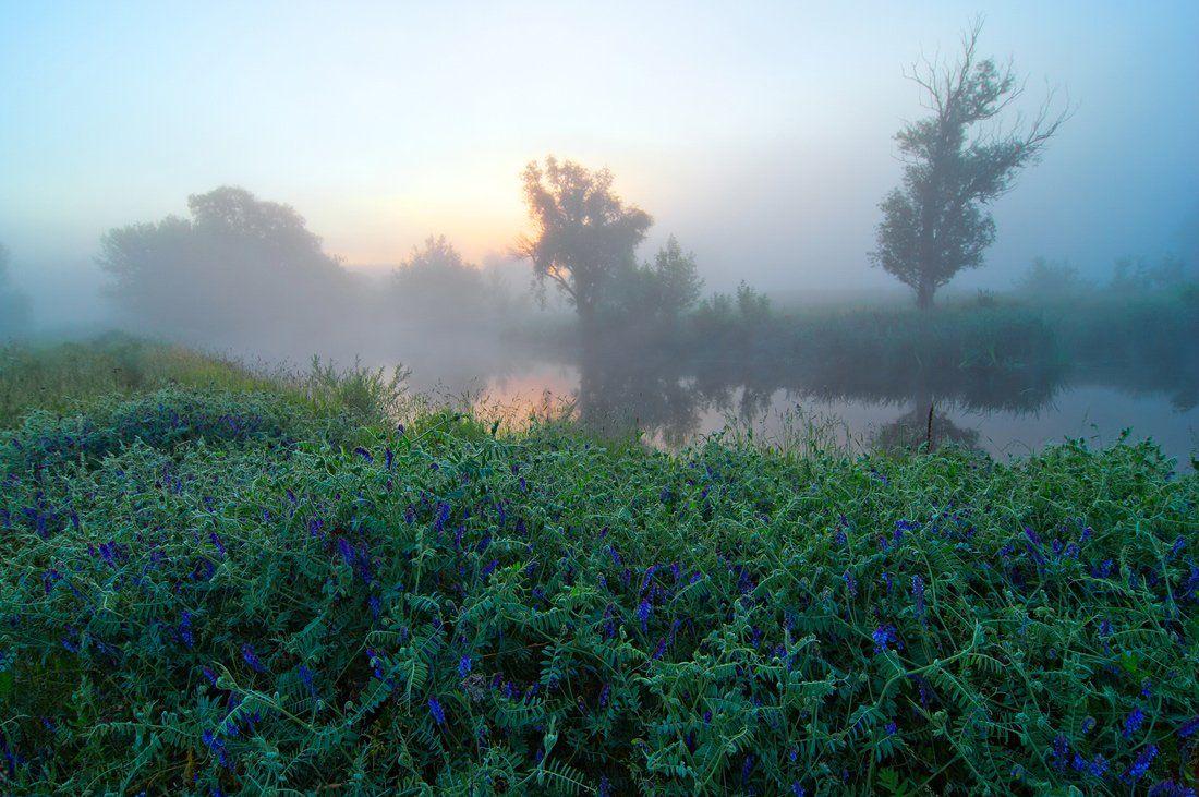 речка , цветы , туман , рассвет, sa56