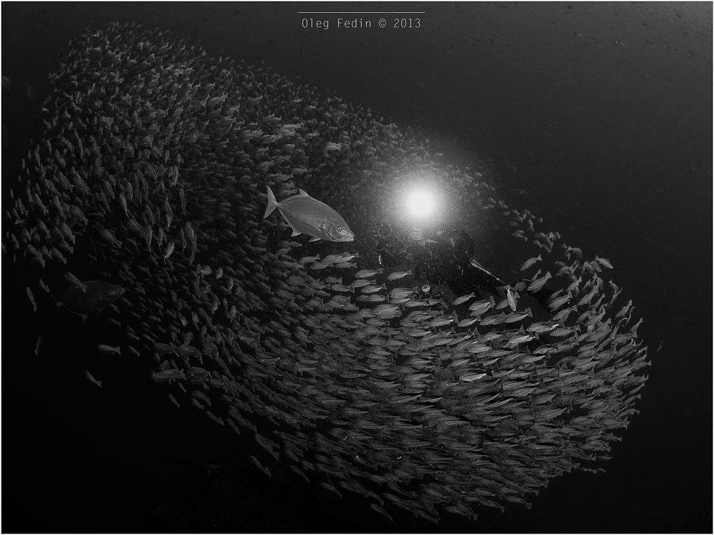 Diving, Kho Phangan, Sail Rock, Thailand, Underwater photography, Дайвинг, Остров Панган, Подводная фотография, Таиланд, Олег Федин
