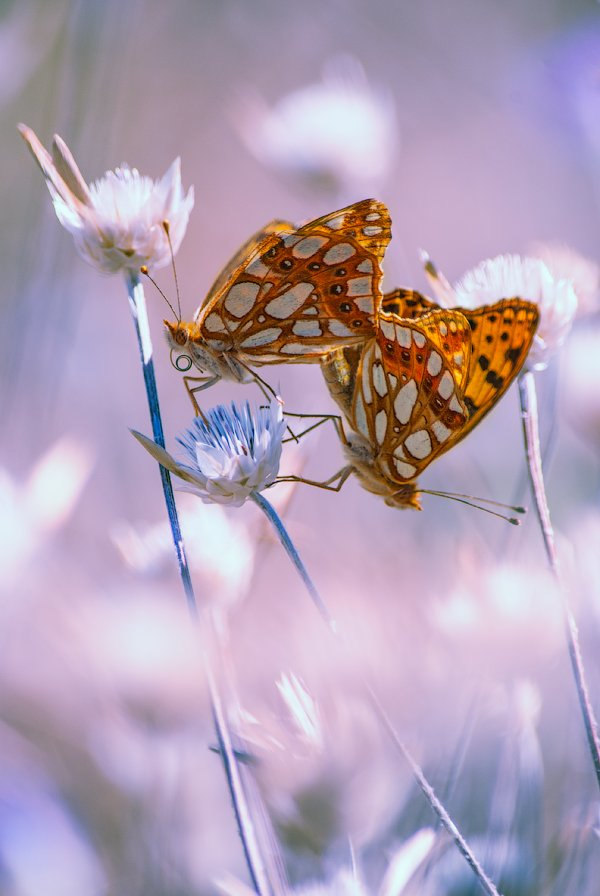 Бабочки, Александра Александрова