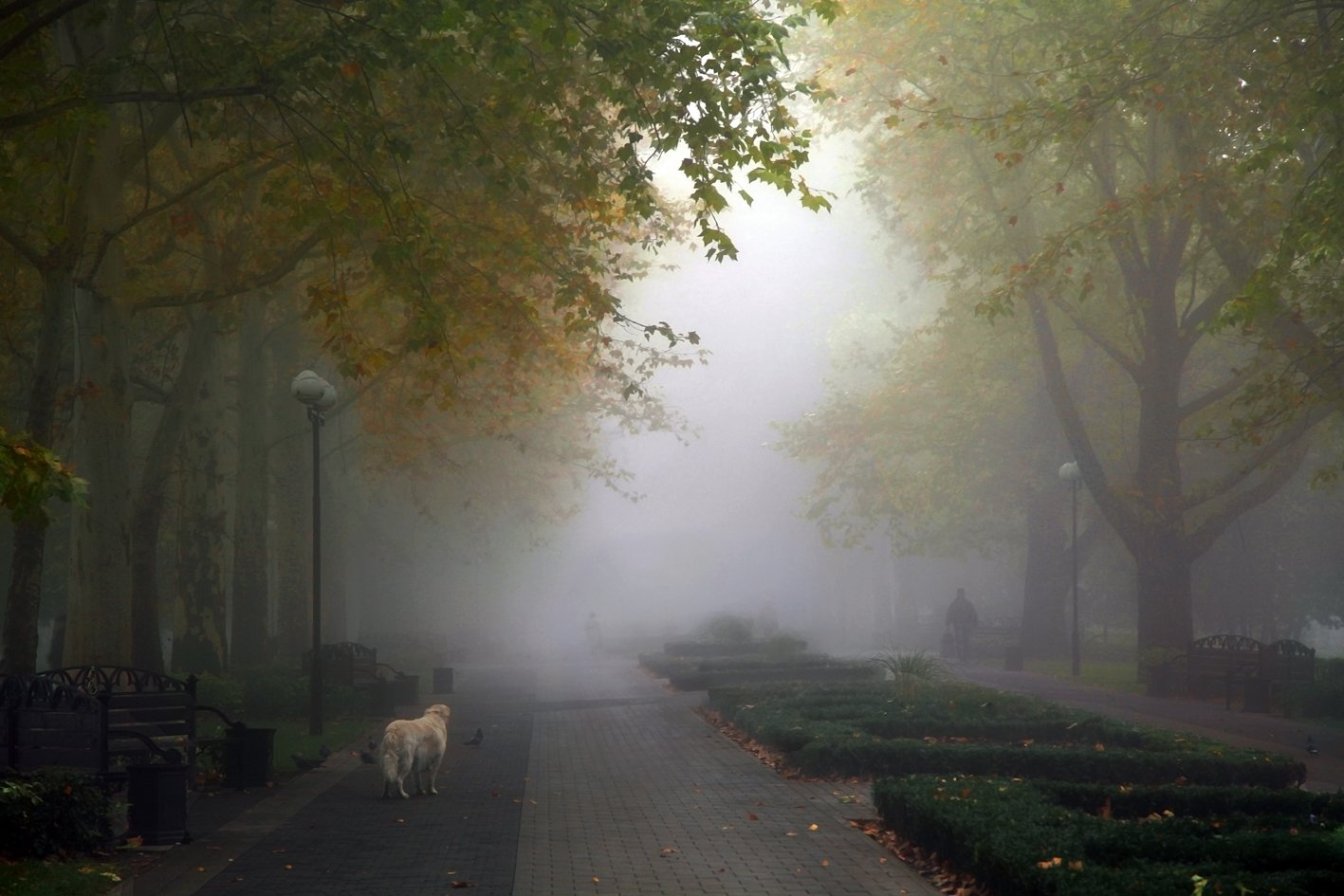 осень, туман, аллея, сквер, собака, Ritta