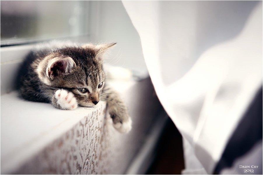 , Darn Cat