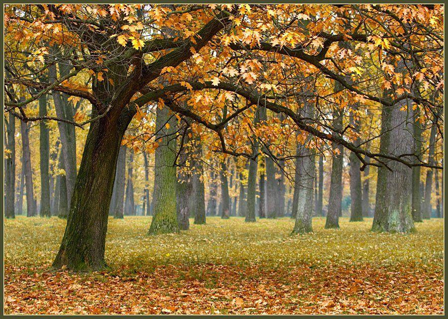 пейзаж, осень, дуб, дубовая роща, золотая, lad_i_mir, lad_i_mir