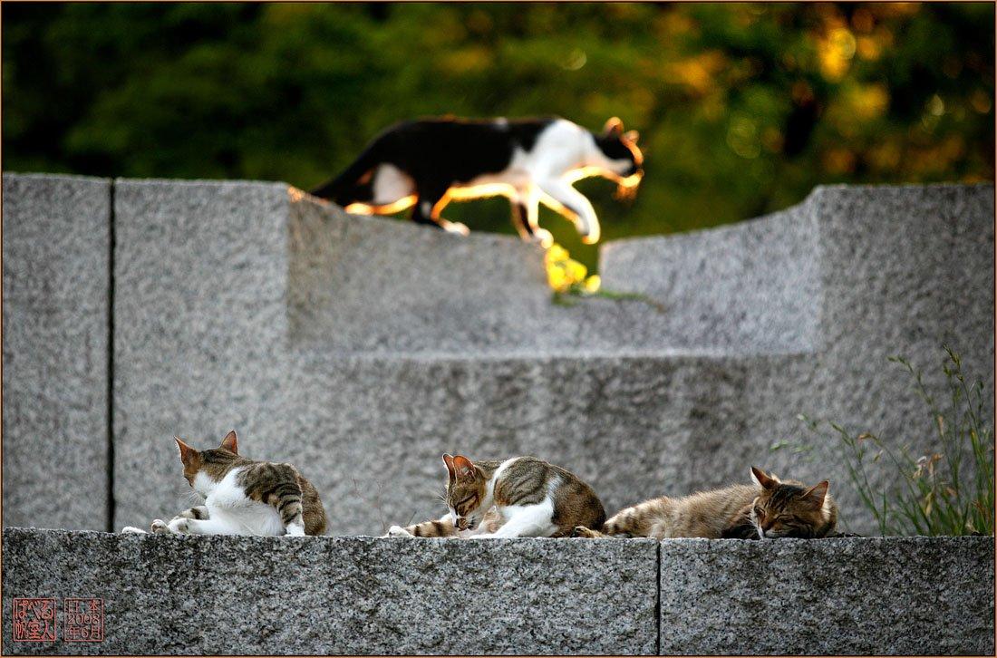 япония, осака, замок, кот, кошка, закат., Ханмурзин Павел