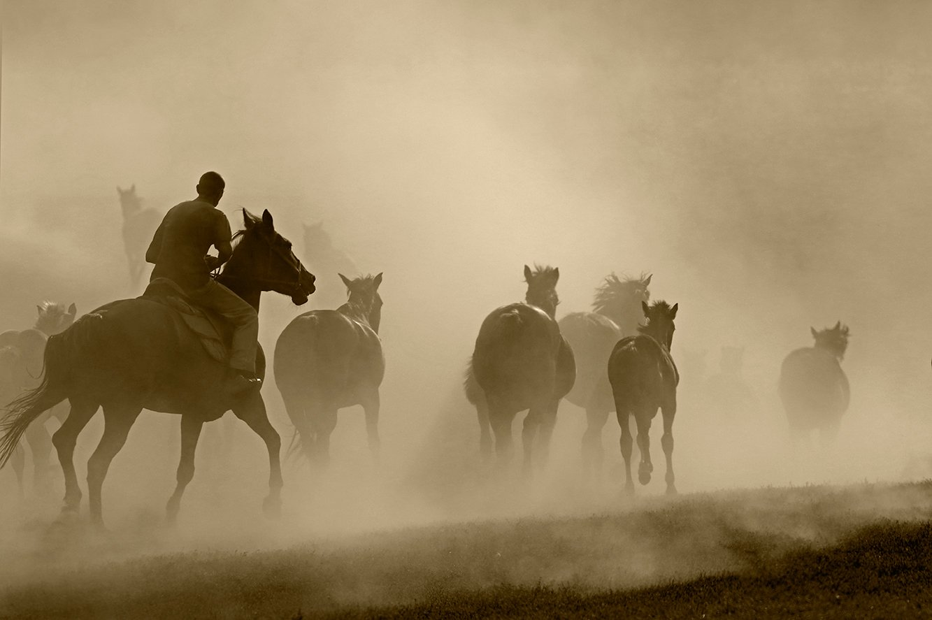 кони,лошади,табун,пыль, Fotojazz
