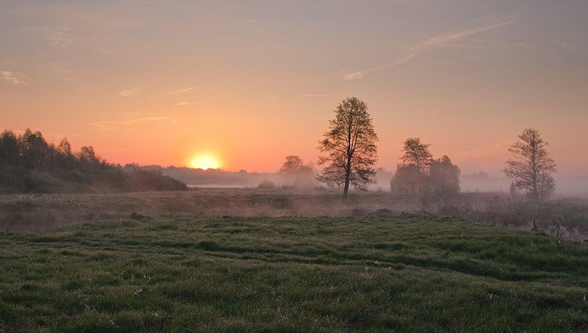 Берег, Деревья, Рассвет, Роса, Солнце, Трава, Тропинка, Туман, Утро, Лукьяненко Денис