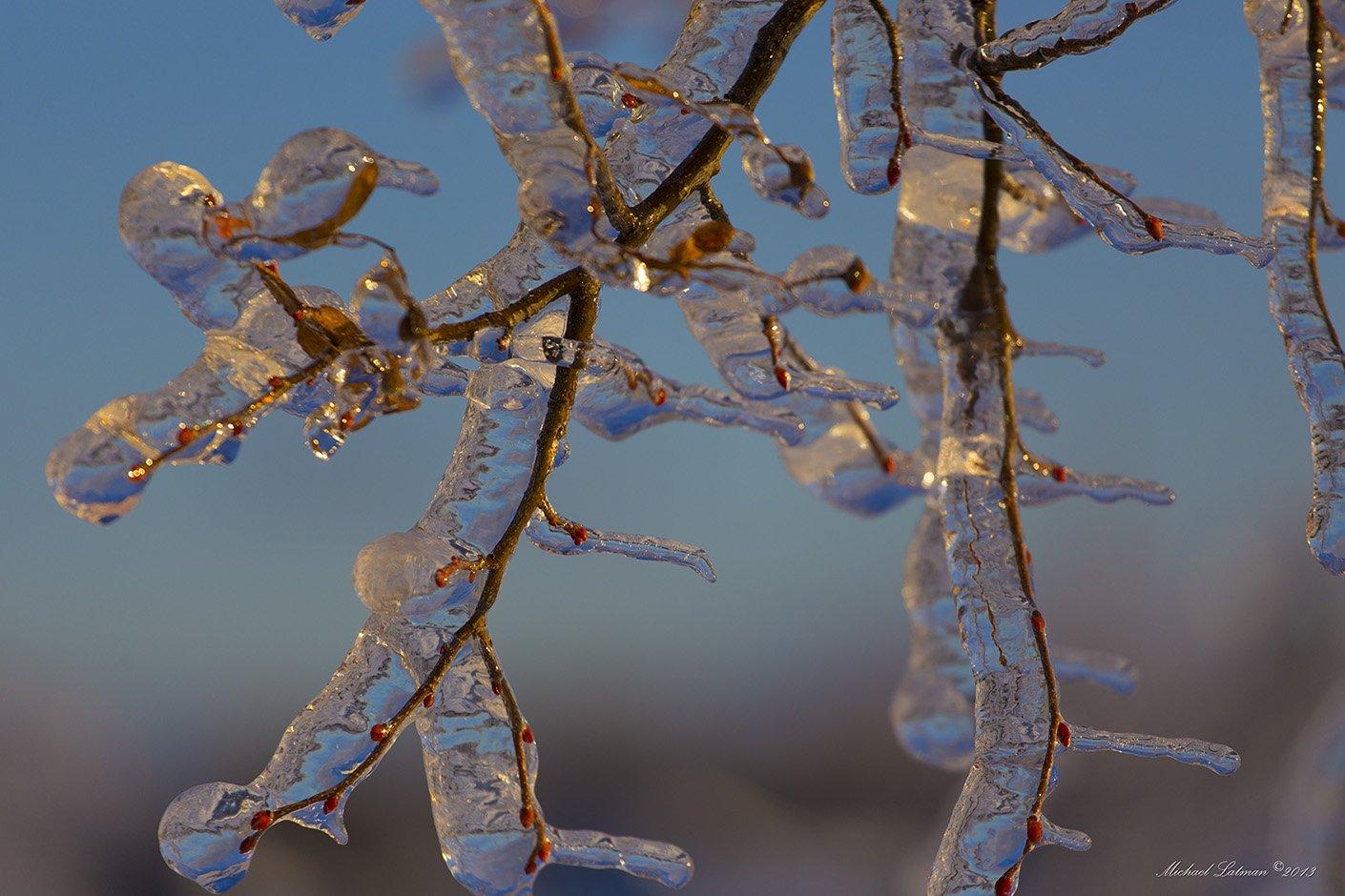 Ice, Sunset, Tree, Winter, Michael Latman
