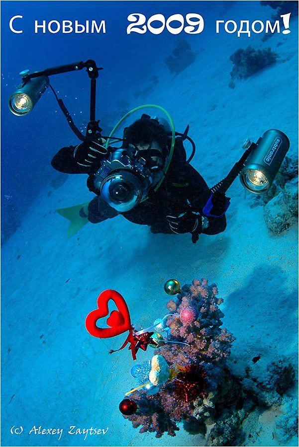 зайцев, обучение, подводной, фотографии, красное, море, Алексей Зайцев