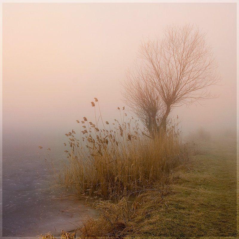 пейзаж, зима, утро, озеро, туман, lad_i_mir, lad_i_mir