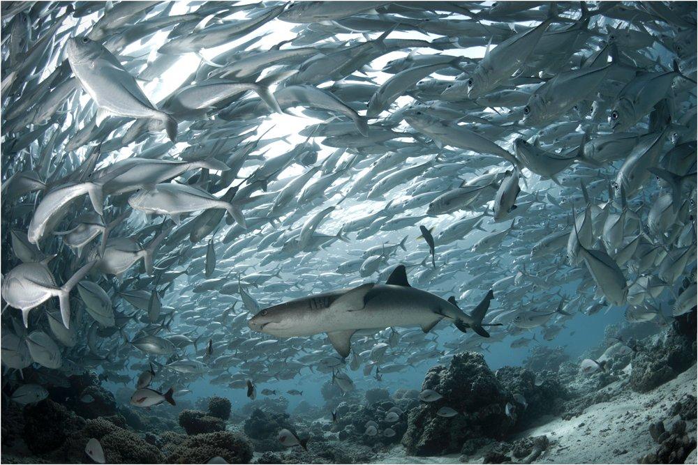 Diving, Malaysia, Sipadan island, Underwater photography, Олег Федин