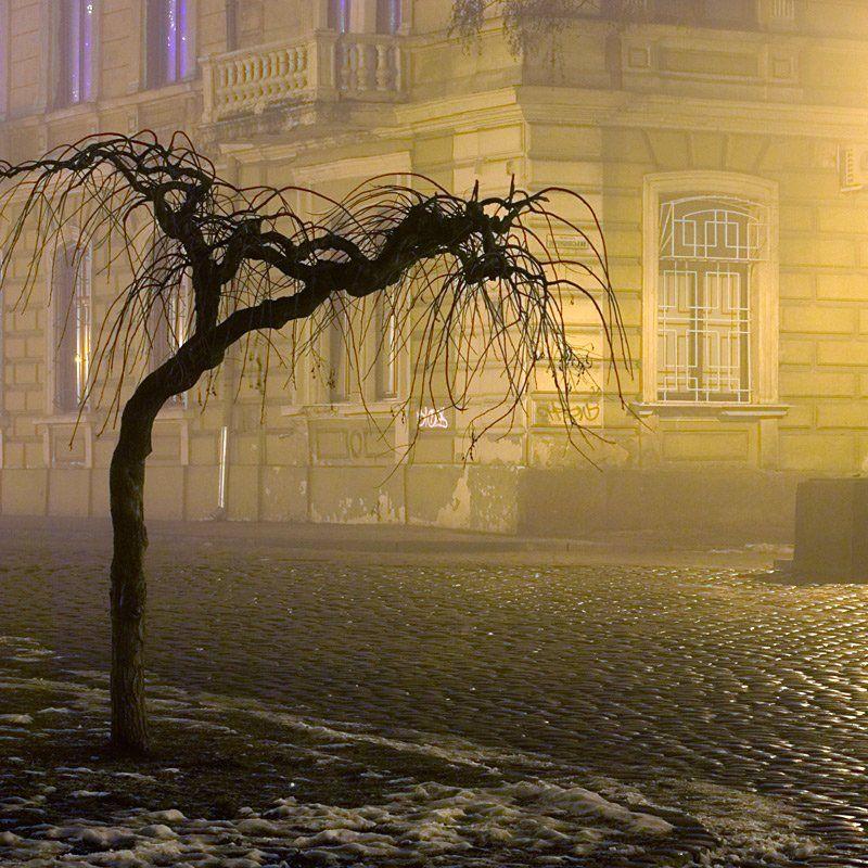 пейзаж, город, зима, ночь, туман, , дерево, одиночество, грусть, lad_i_mir, lad_i_mir
