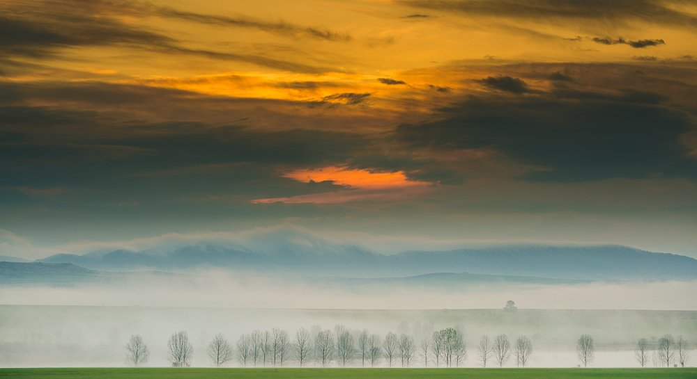 sunrise, fog, morning, wood, clouds, wonderful, Philip Peynerdjiev