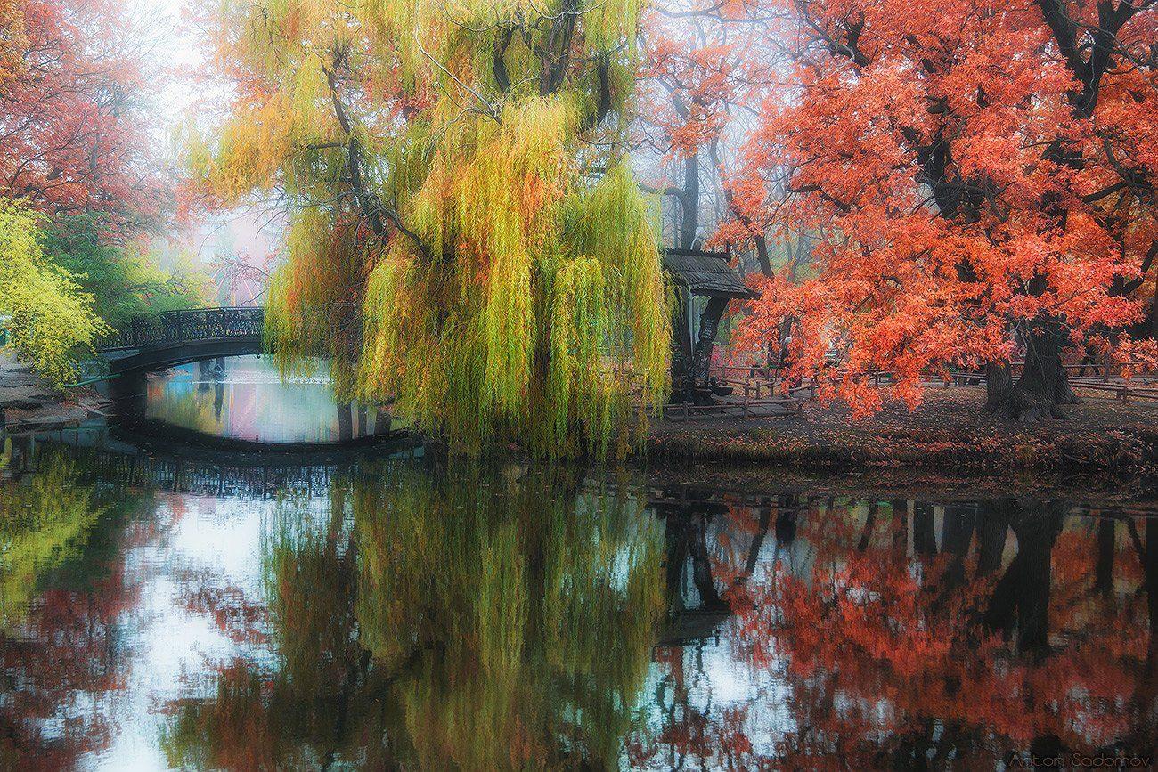 саратов, парк, осень, Антон Садомов