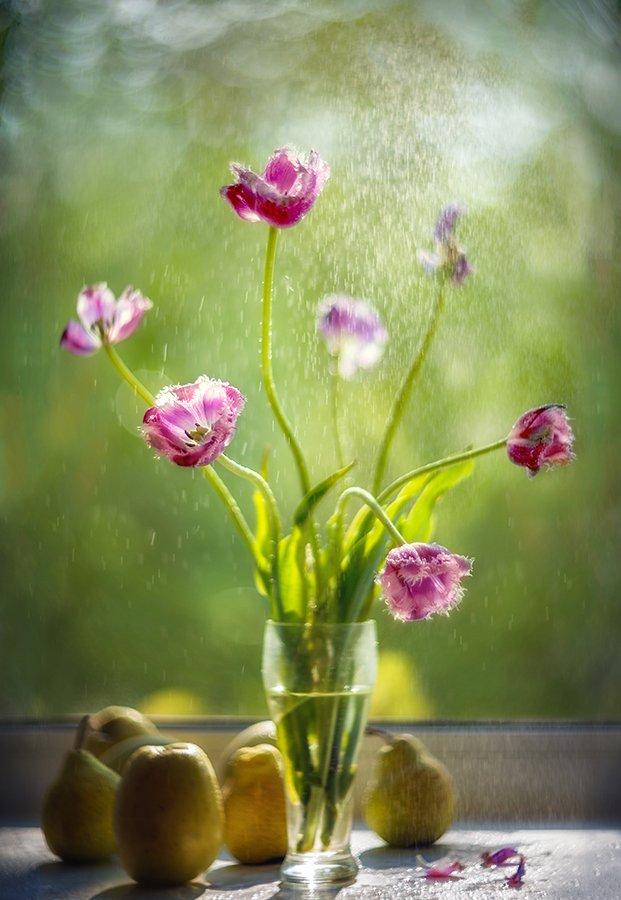 тюльпаны, окно, дождь, Сергей Хромов