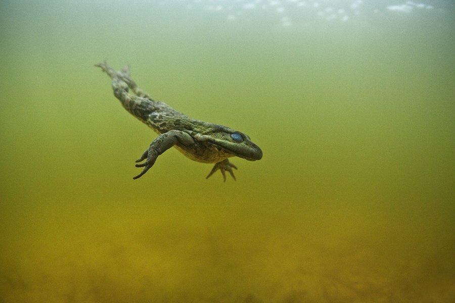 Underwater, Эдуард VTORNIK  Николаев