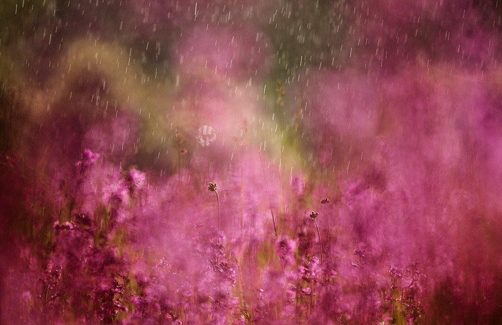 смолка, дождь, Юлия Втюрина