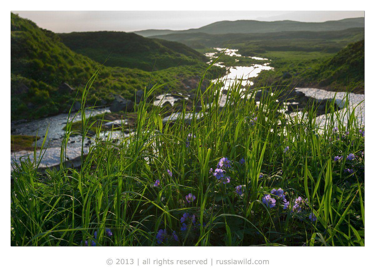 пейзаж, лето, камчатка, Николай Зиновьев