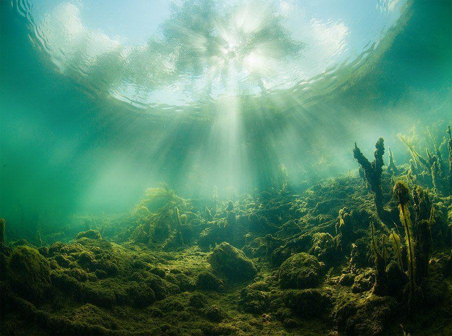 Green, Plants, Russia, Sun, Tree, Underwater, Water, Нарчук Андрей