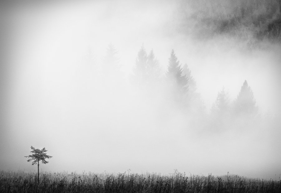 карпаты, туман, дерево, Андрей Радюк