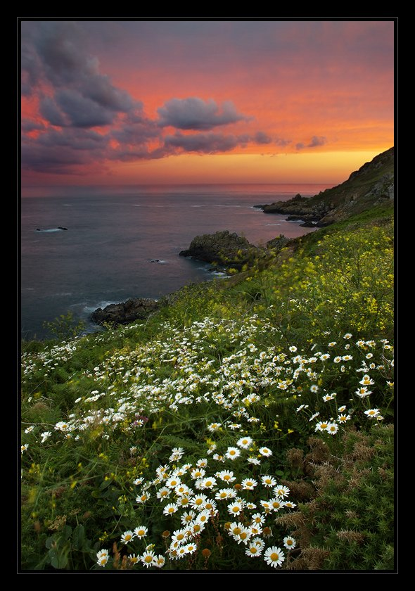 guernsey, ромашки, июнь, океан, закат, Karlis Keisters