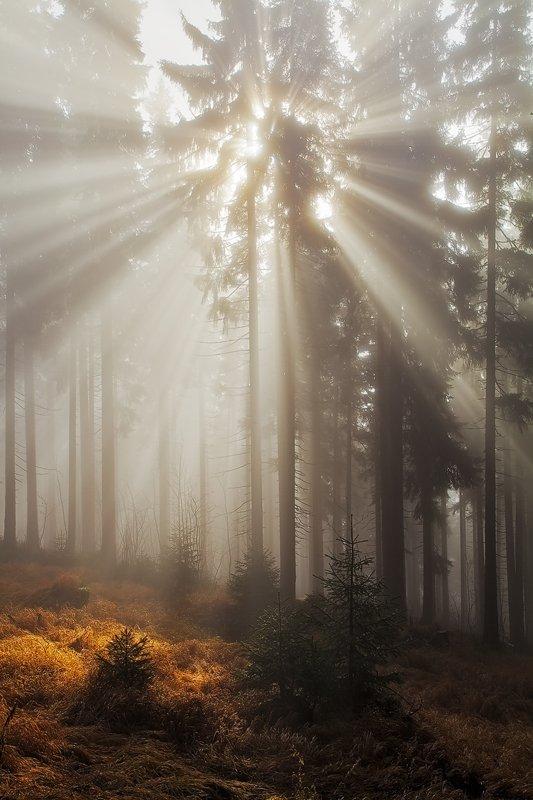 Autumn, Czech republic, Fall, Forest, Light, Mist, Rays, Sun, Martin Rak