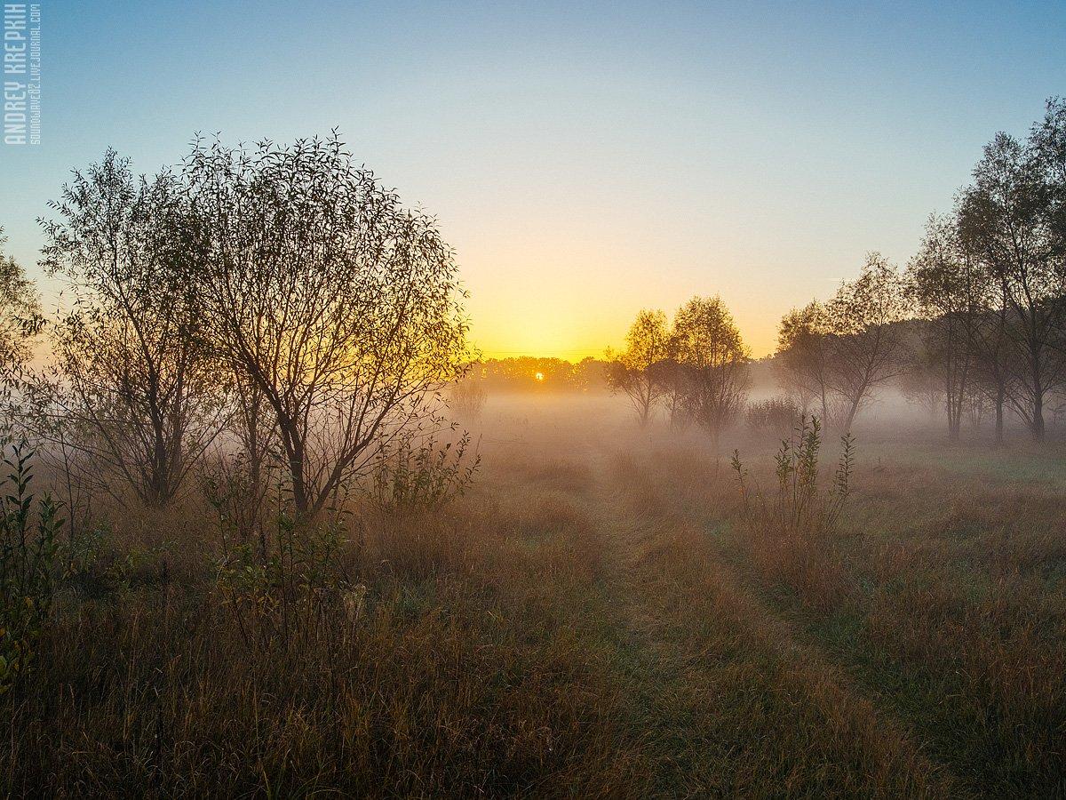 Деревья, Природа, Рассвет, Солнце, Туман, Андрей Крепких (Sound Wave)