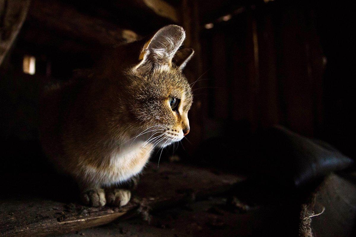 животное, животные, кот, кошка, Дмитрий