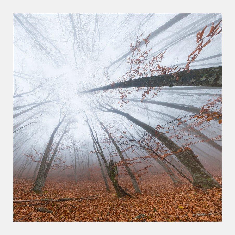 крым, лес, туман, Михаил Гапонов