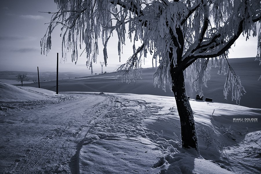 Landscape, Road, Snow, Sunset, Tree, Winter, ირაკლი დოლიძე