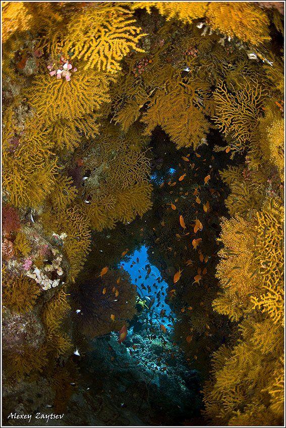 зайцев, обучение, подводной, фотографии, , красное, море, пещерка, Алексей Зайцев