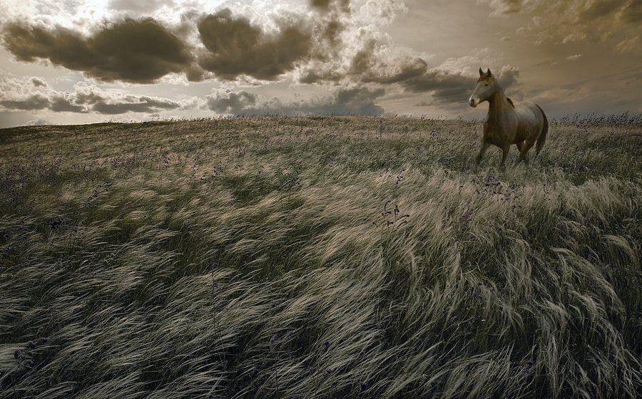 комп-арт, ковыль, конь, свобода, воля, lad_i_mir