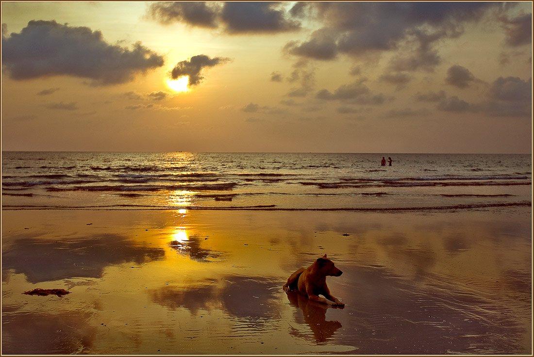 таиланд, ко чанг, волна, закат, собака, Ханмурзин Павел