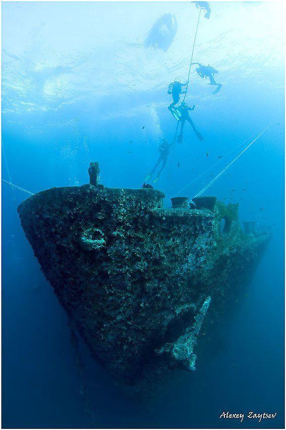 зайцев, обучение, подводной, фотографии, , красное, море, рэк, Алексей Зайцев