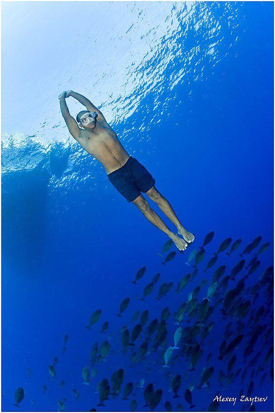 зайцев, обучение, подводной, фотографии, , красное, море, фри, дайвер, Алексей Зайцев