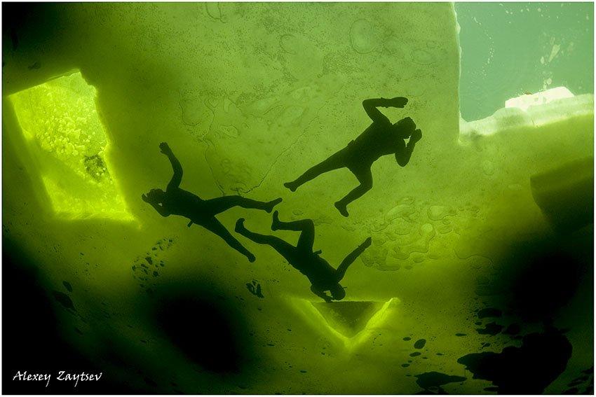 зайцев, обучение, подводной, фотографии, , белое, море, фри, дайверы, Alexey Zaytsev
