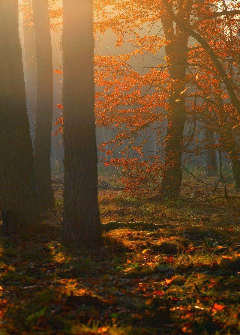 вечер, лес, осень, свет, Владимир