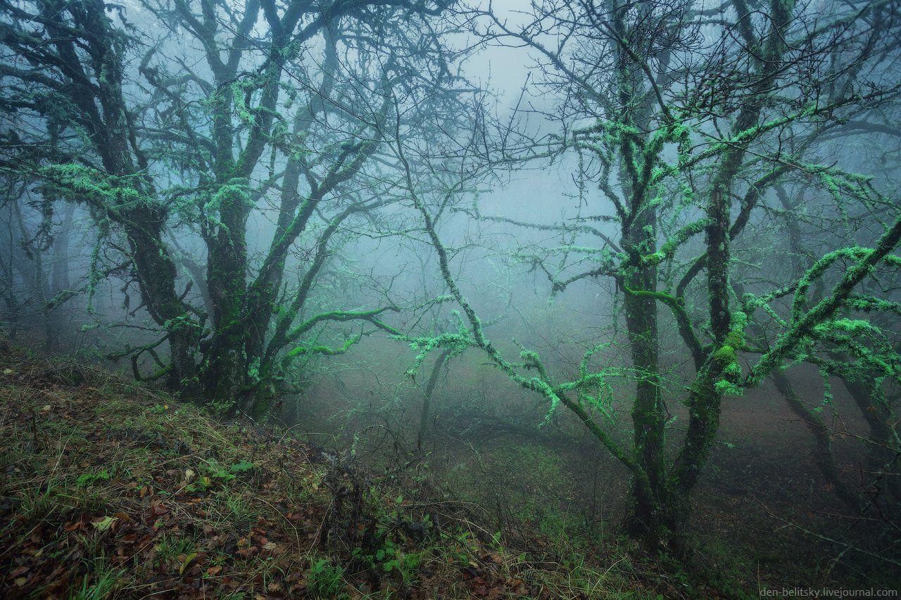 Крым, Лес, Облака, Осень, Пейзаж, Туман, Утро, Денис Белицкий