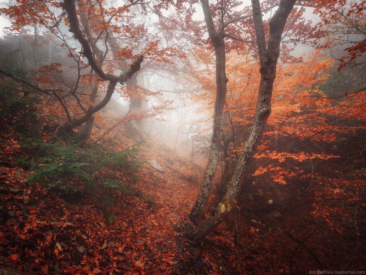 Деревья, Крым, Лес, Облака, Осень, Пейзаж, Туман, Утро, Денис Белицкий