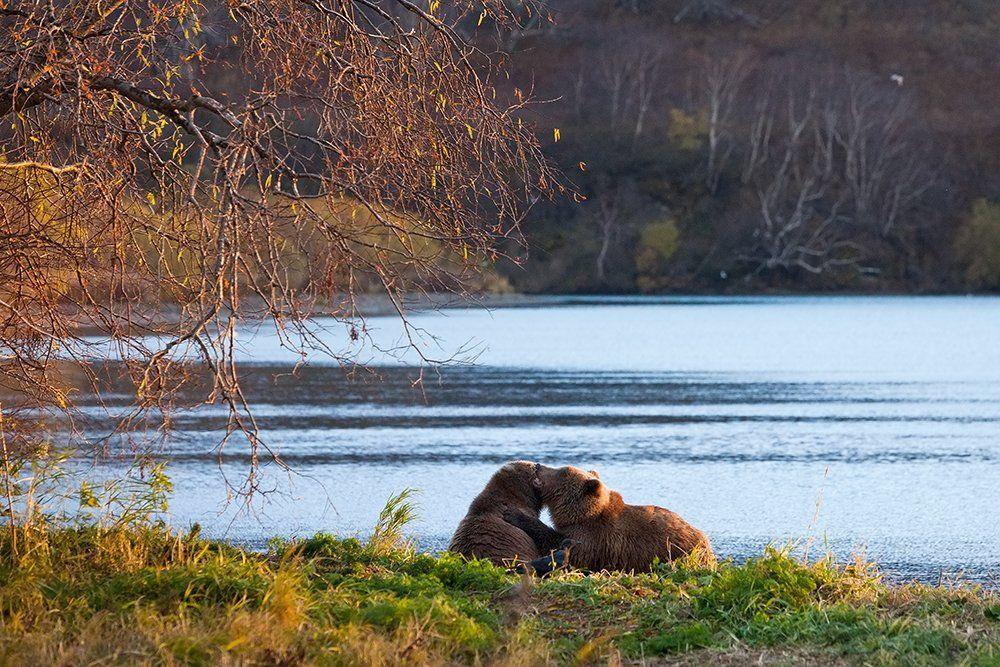 Wildlife, Камчатка, Курильское озеро, Сергей Краснощёков