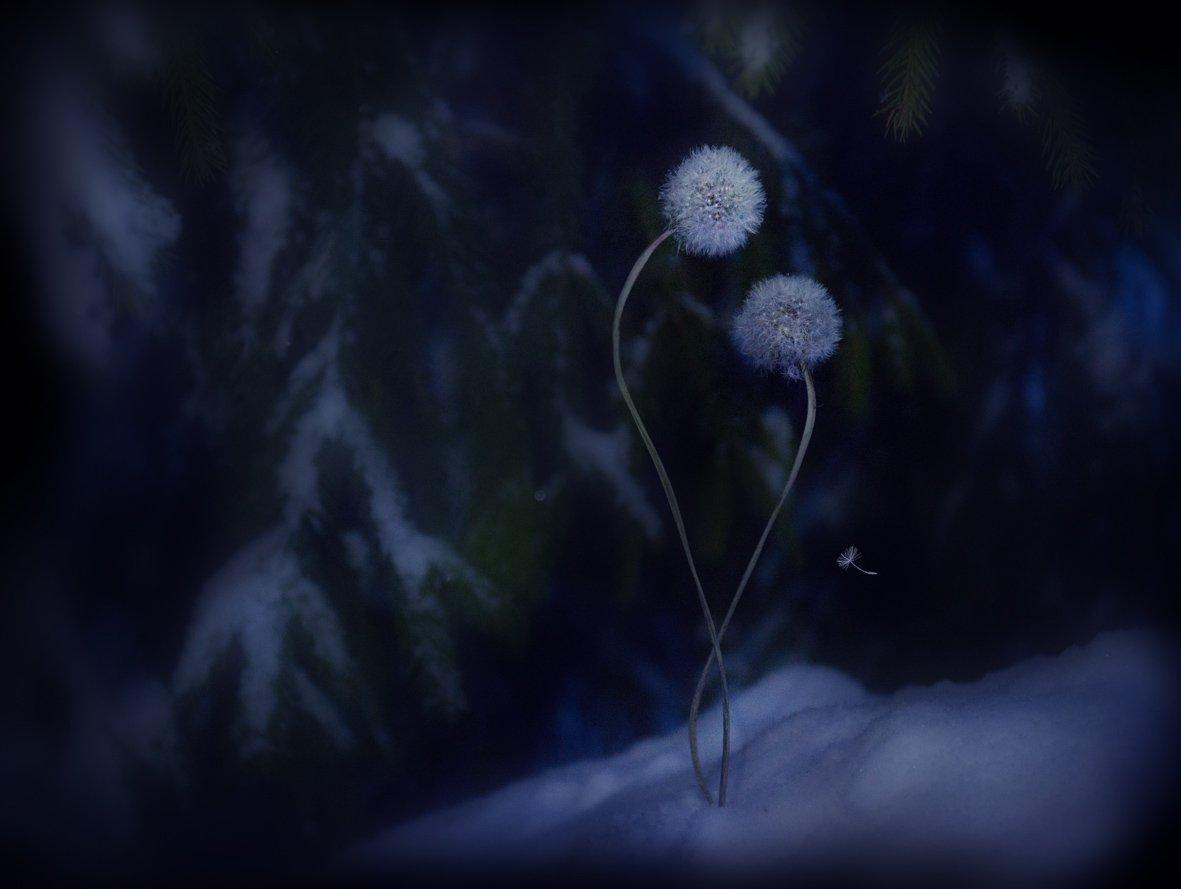 зима, одуванчики, грусть, печаль, Татьяна Гориловская