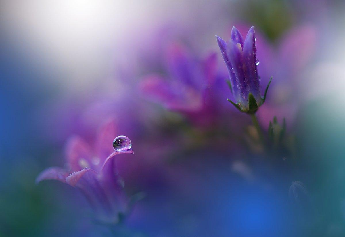 Close-up, Drop, Flower, Macro, Nikon, Juliana Nan