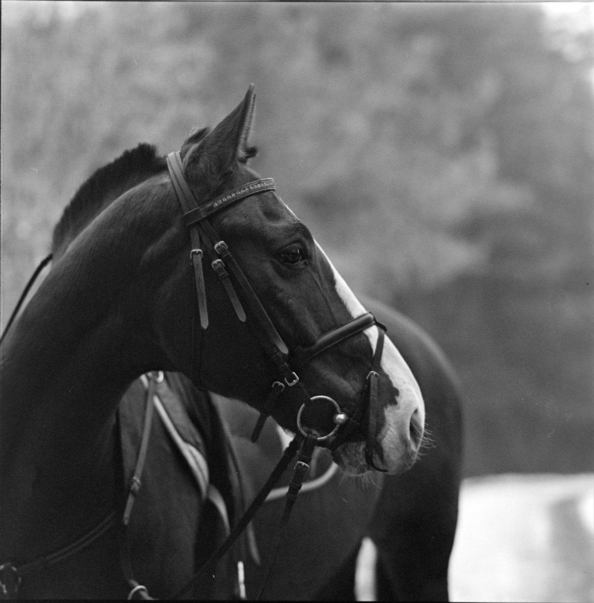 , hasselblad, Kodak, конь, пленка, Средний формат, Ч/б, Самойлов Алексей