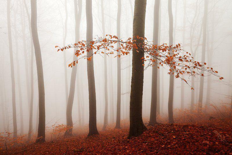 Autumn, Beech, Branch, Colors, Czech republic, Fall, Fog, Foliage, Forest, Landscape, Light, Martin rak, Mist, Mood, Mountains, Nature, Photography, trees, Trunks, Martin Rak